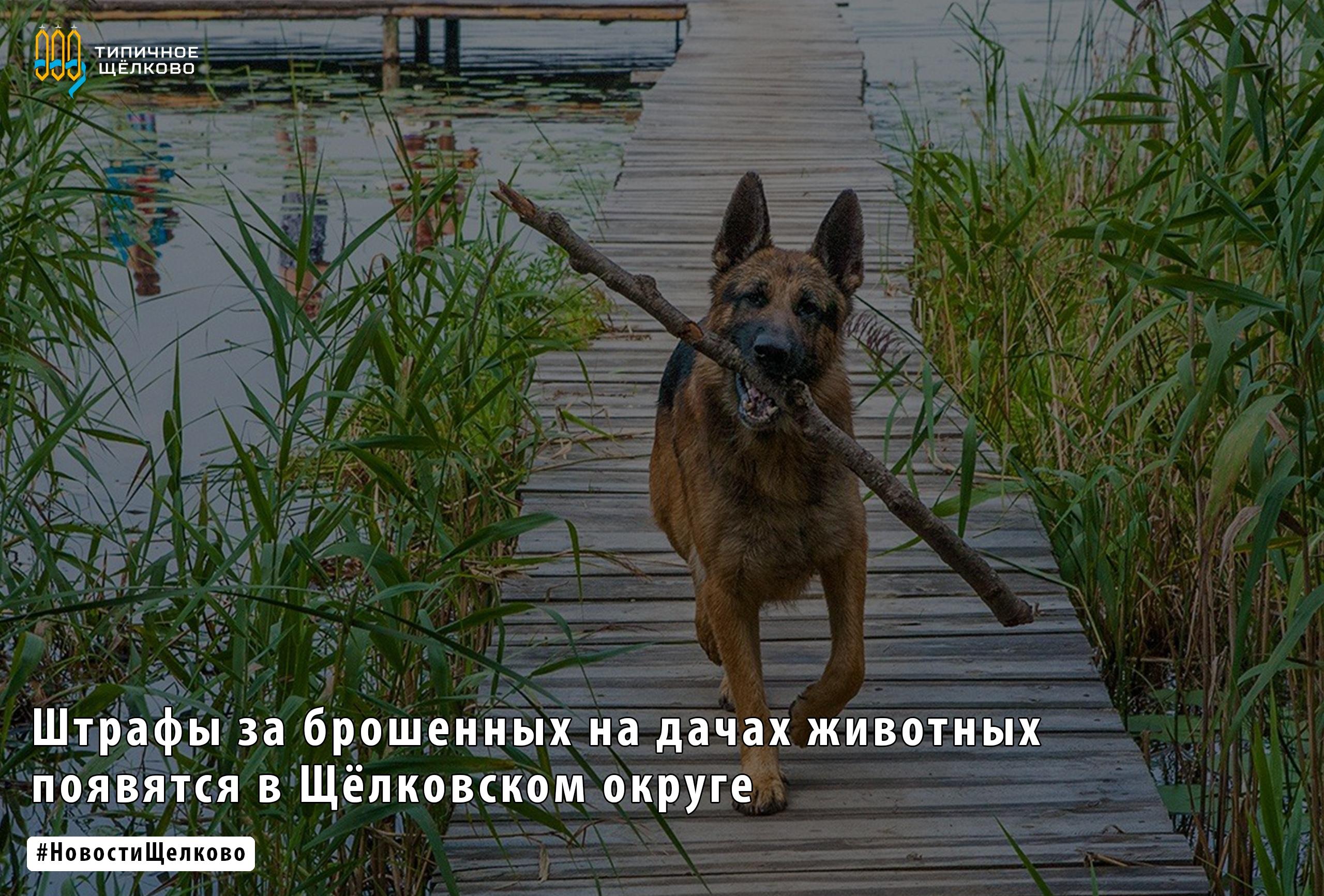 В Московской области проработают вопрос о введении