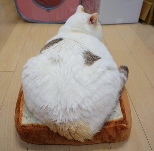 Ваш котик любит коробочки?