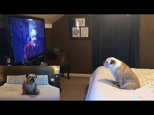 Khaleesi Reacts to Pee-Wee's Big Adventure