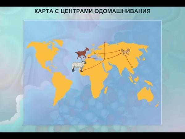 Карта с центрами одомашнивания. Биология