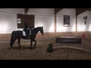 Working Equitation Akhal-Teke Training