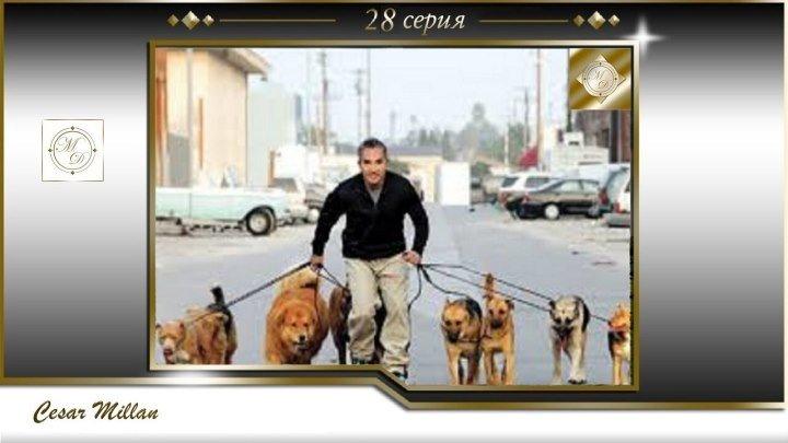 28 серия Сезар Миллан Переводчик с собачьего Ruby Rana 2004 03