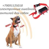 собаки всех пород, кобели для вязки | ВКонтакте