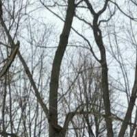 Фото профиля Дементия Розенталя