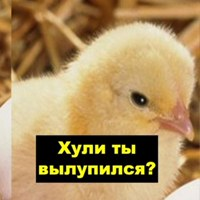 Личная фотография Кирилла Насибулина