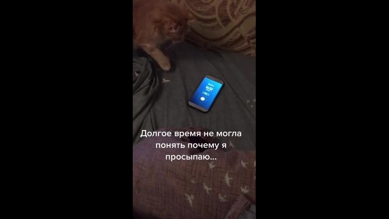 котик отключает будильник