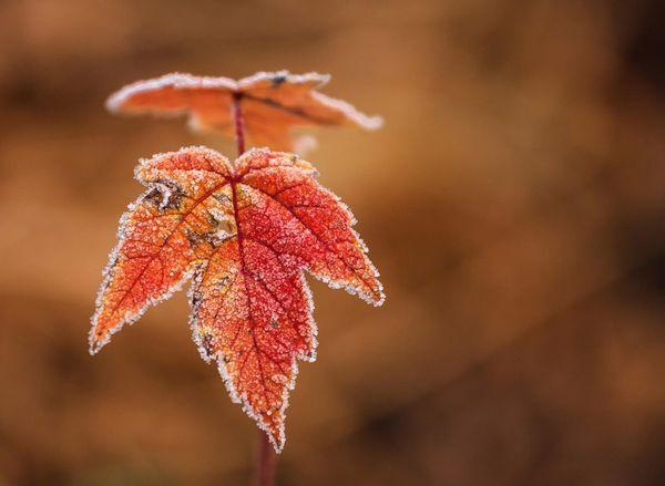 Заморозки до ‑5 градусов ожидаются в Самарской обл...