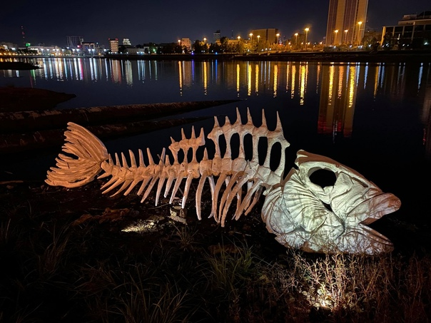 Вот это рыбина! 😲  Гигантский скелет появился на б...