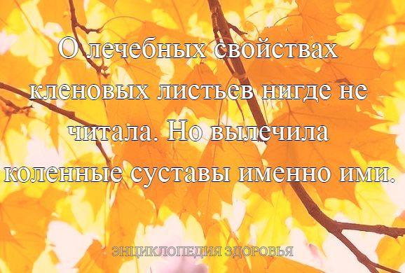 О лечебных свойствах кленовых листьев нигде не читала. Но вылечила