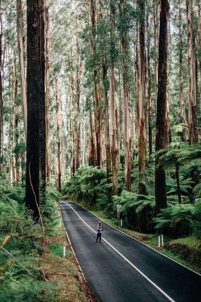 Мир делится на два класса-одни веруют в невероятное, другие совершают невозможное ed Woods par California