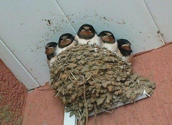 Наши соседи на даче)