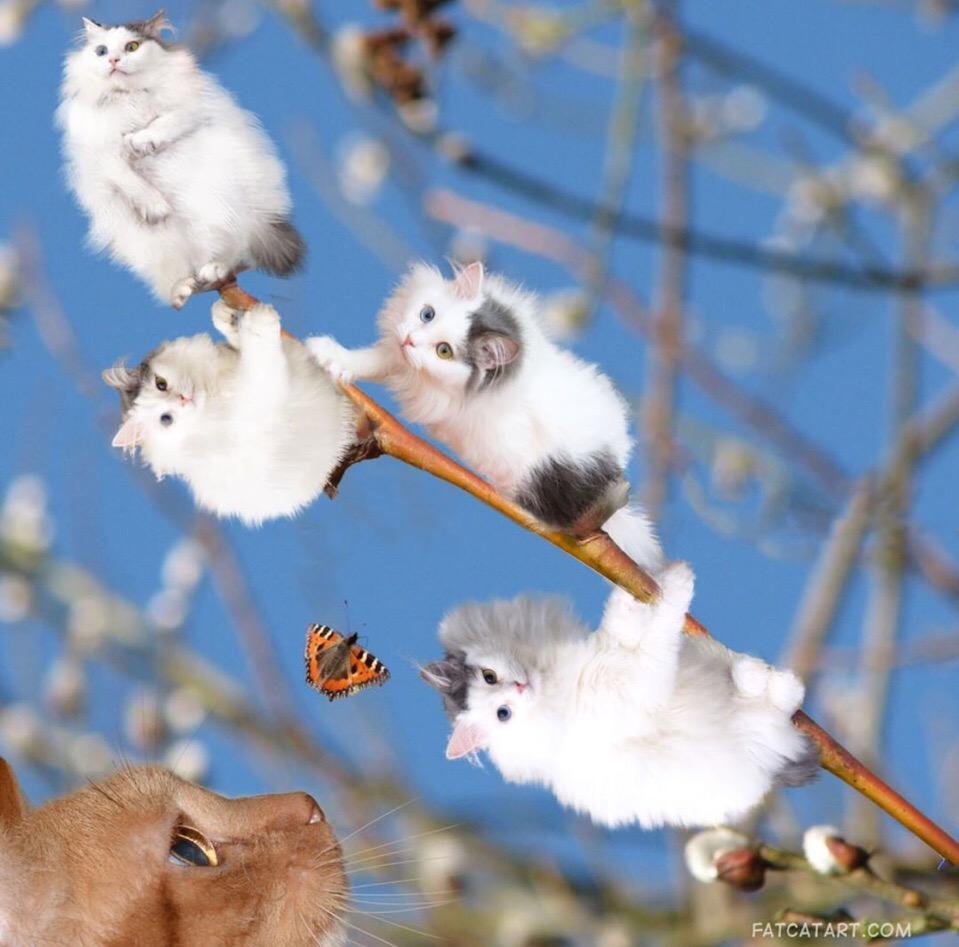 Завтра - международный день котиков :3