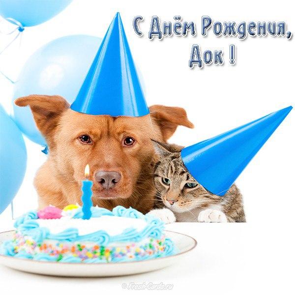 Прикольные поздравления с днем рождения ветеринару они приспосабливаются