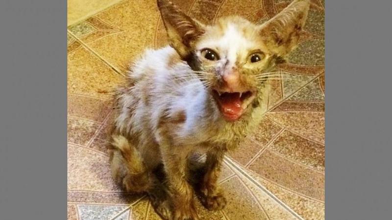 Ветеринар хотел усыпить его но любовь и забота в который раз сотворили чудо