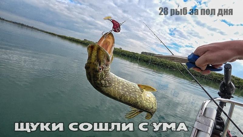 Бешеный клёв щуки на спиннинг Рыбалка на щуку с лодки