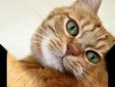 Песня рыжий кот - обормот