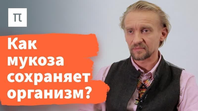 Микробы кишечника и здоровье Дмитрий Алексеев ПостНаука