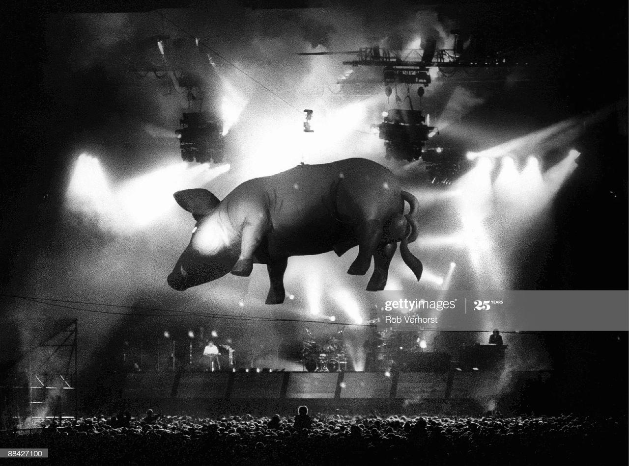 Парящая свинья на концерте , примерно 1977 - 1978 годы