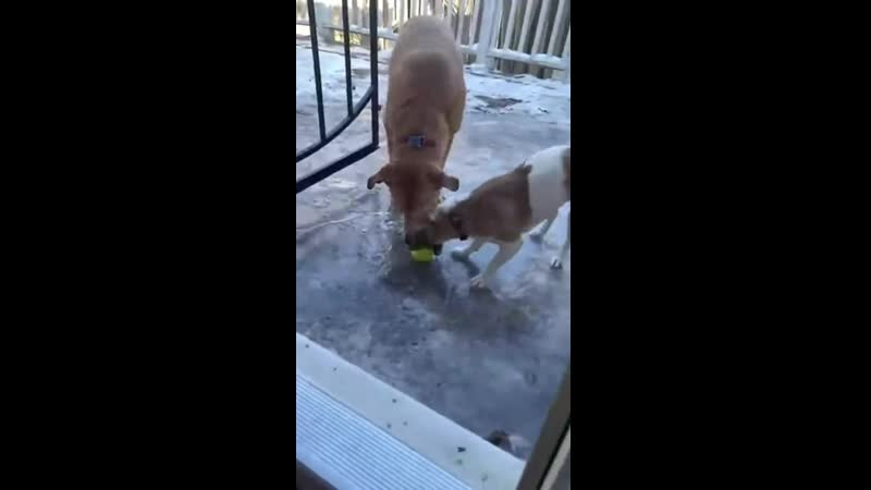 Poor doggos can't get their ball
