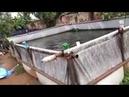 Fish farming process step by step