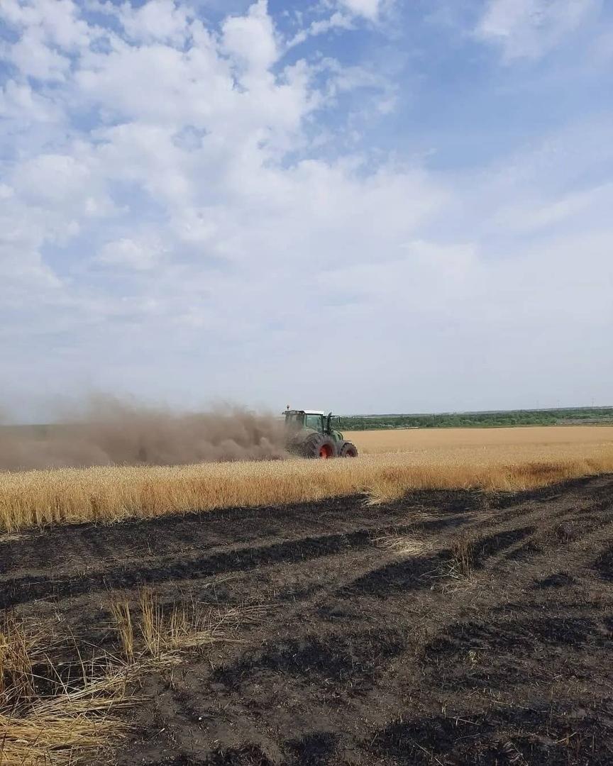 Вчера в районе посёлка Студёный Петровского района горели посевы пшеницы
